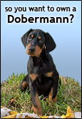 So You Want To Own A Dobermann?